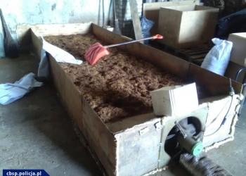 Nielegalna wytwórnia tytoniu