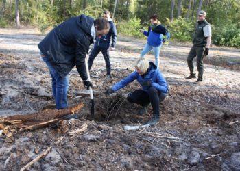 Samorządowe sadzenie lasu