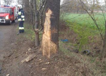 Uderzył w drzewo