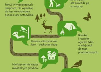 Jak przygotować się do wyprawy do lasu?