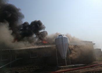 W Chwaliszewie spłonęło 700 świń
