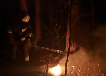 Kolejne pożary w lasach