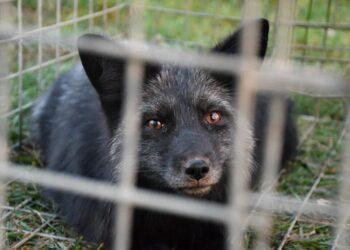 Usłyszeli zarzuty znęcania się nad zwierzętami