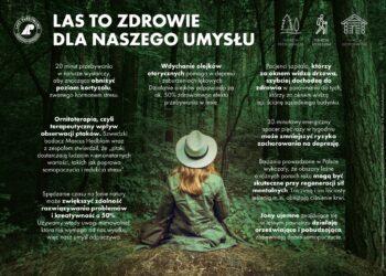 Doświadczaj lasu wszystkimi zmysłami